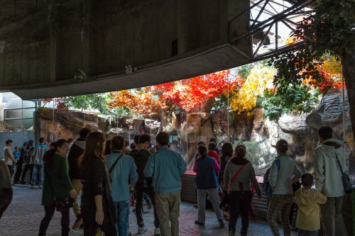 """В """"Павильоне панд"""" Пекинского зоопарка"""