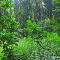 Поездка в Лесной городок