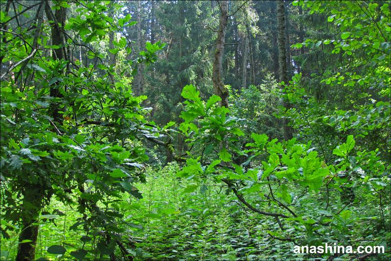 Лесной городок, лес