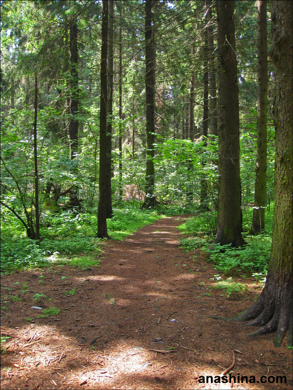 Дорога в лесу, Лесной городок