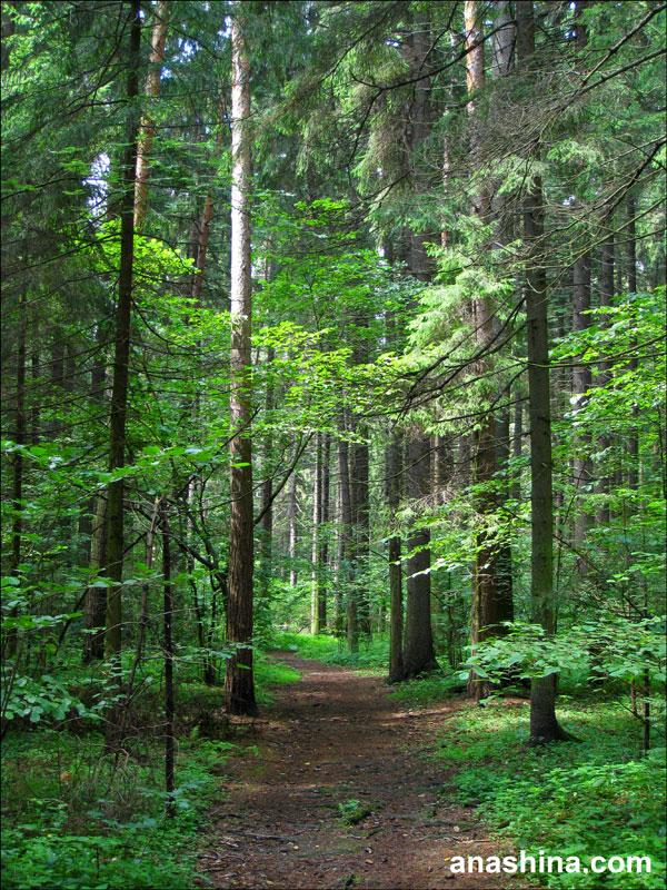 Лесная дорога, Лесной городок