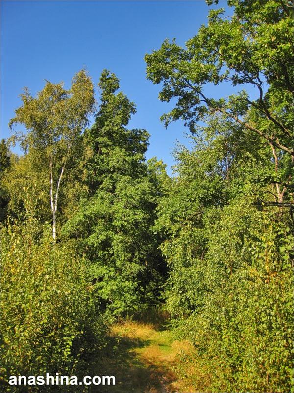 Въезд в лес, август в Подмосковье