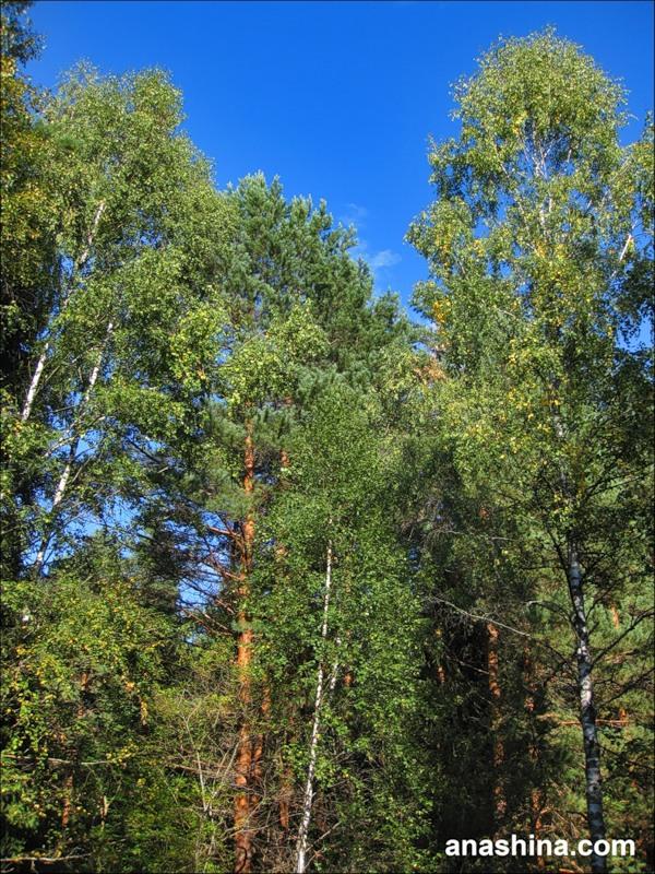 В лесу, сентябрь в Подмосковье