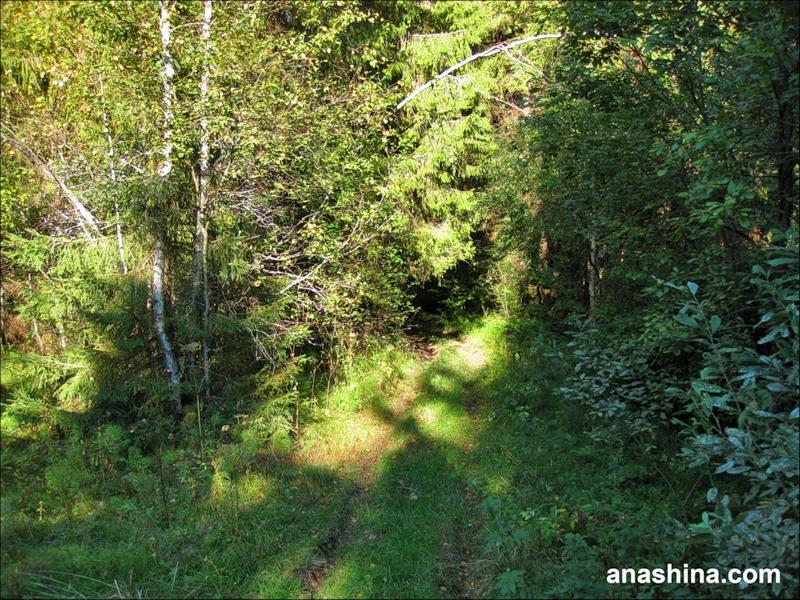 Лесная дорога, сентябрь в Подмосковье