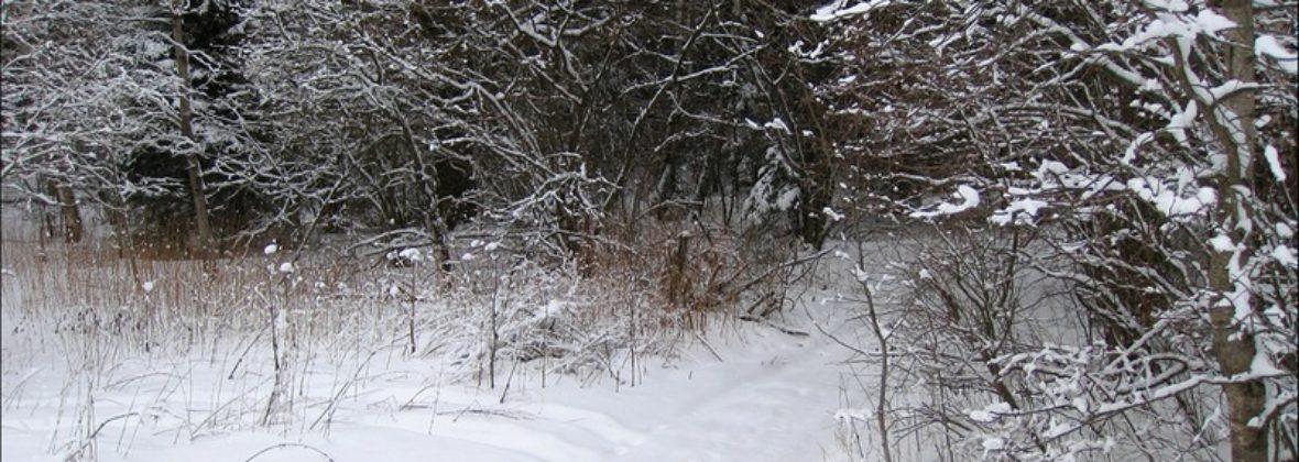 А под снегом-то вода!