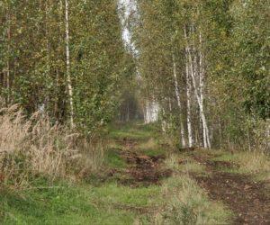 Дубненский болотный массив