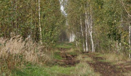 Журавлиная родина. Часть 2: Журавли, болота и бобровая плотина