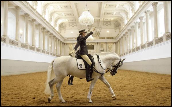 Испанская школа верховой езды в Вене. Обучение молодого всадника