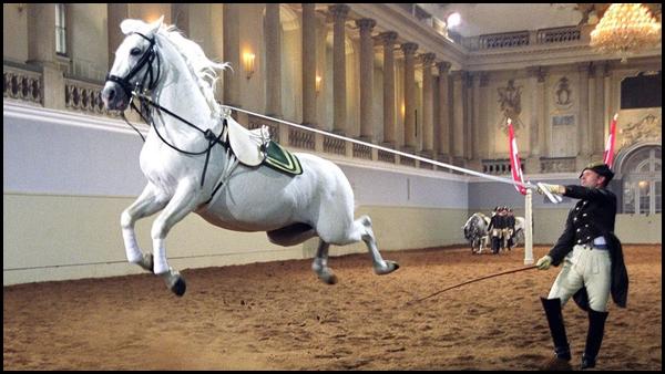 Испанская школа верховой езды в Вене. Каприоль