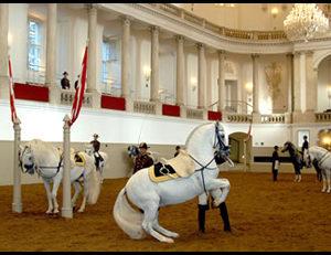 Испанская школа верховой езды в Вене. Тренировка