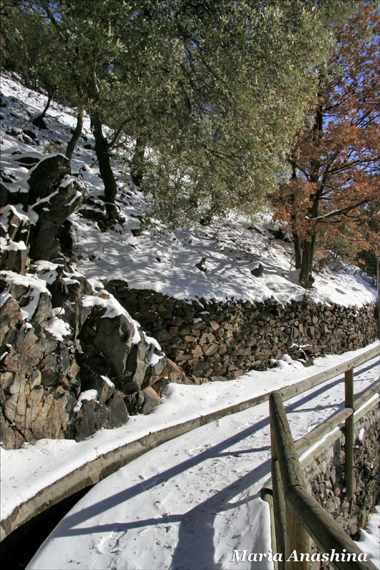 Снег и деревья