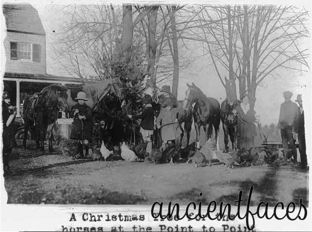 Рождественская елка для лошадей