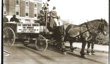 Рождественский праздник для лошадей