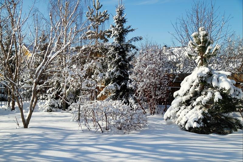 Наш сад после снегопада