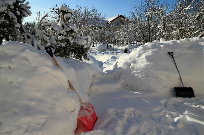 Наш заснеженный сад