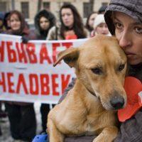 Можно ли оправдать убийство бездомных собак?