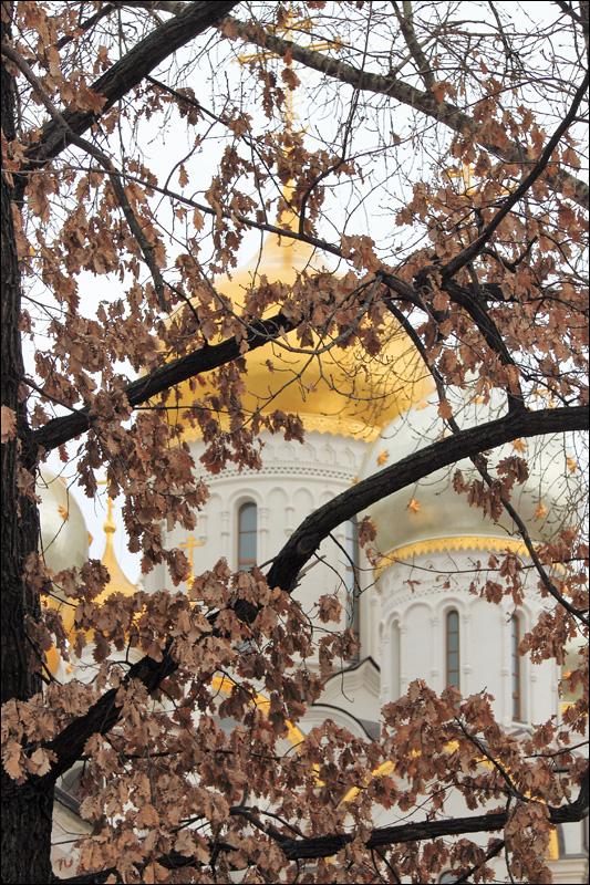 Зачатьевский монастырь, прошлогодние дубовые листья
