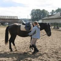 НХ, или китайская философия в приложении к лошади