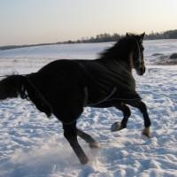 Фотосессия Кубика в зимнем поле