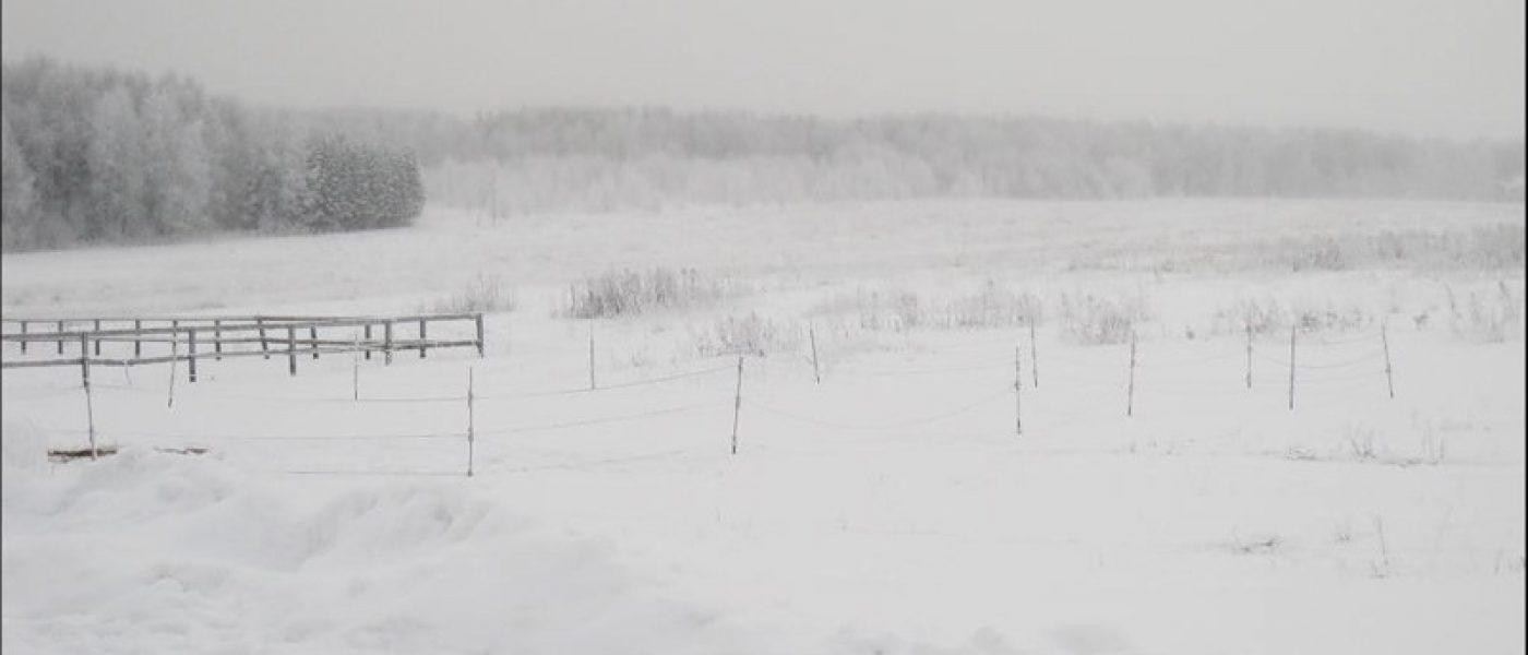 Прогулка в поля