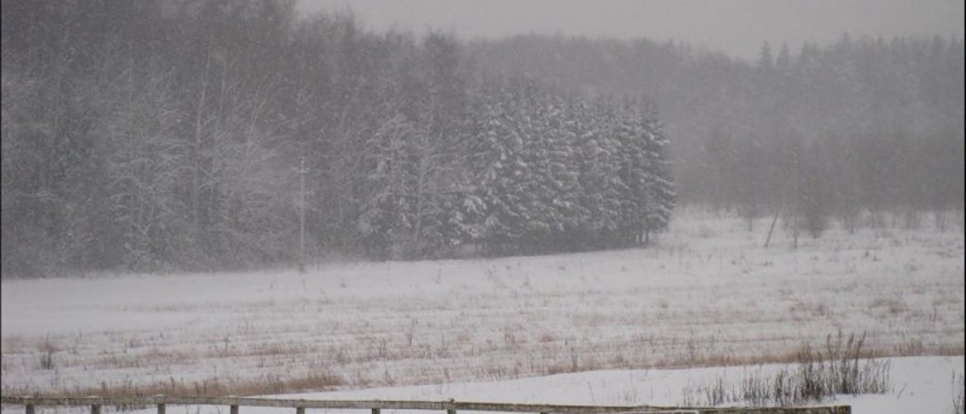 Прогулка в снег