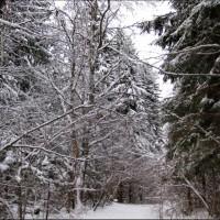 Спокойная поездка по зимнему лесу