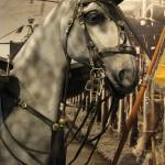 Боевая немецкая лошадь в музее Нойхауза