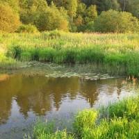 Красавица река Малая Истра