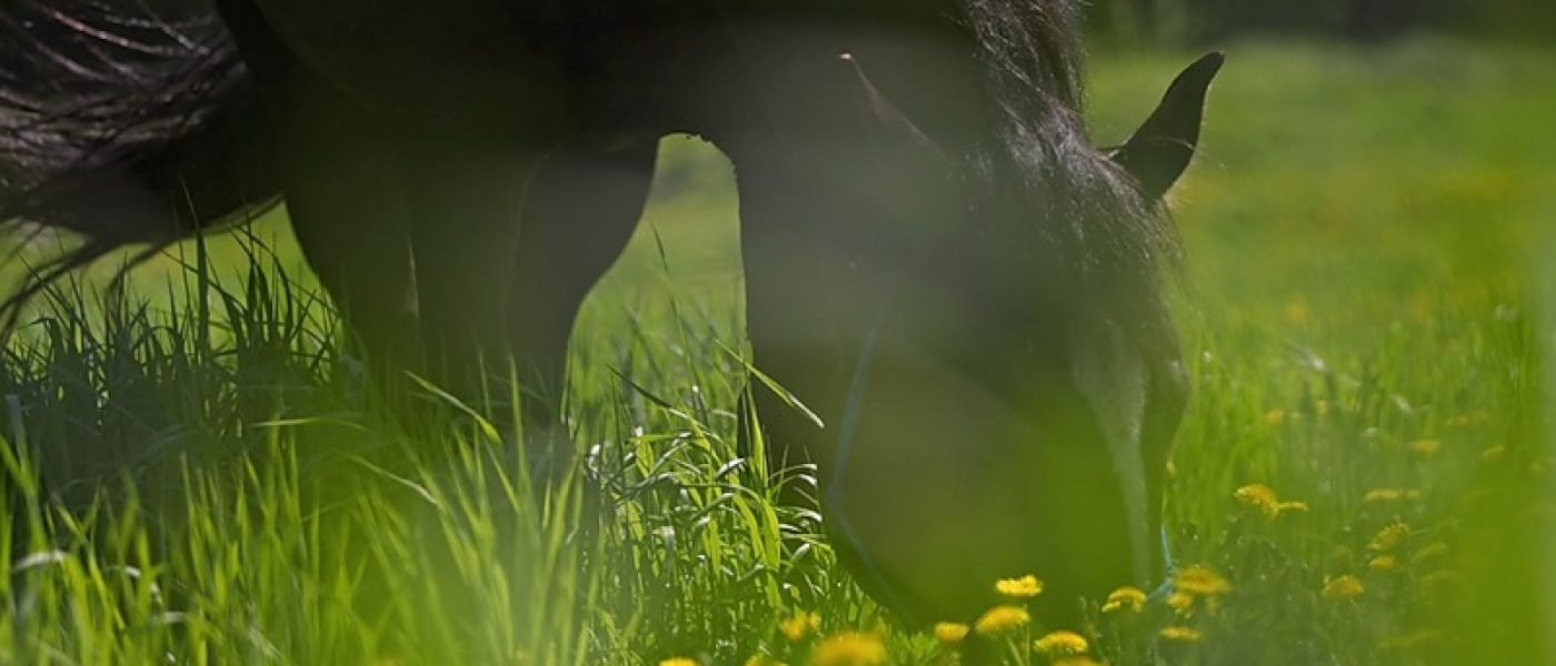 Фотосессия Кубической лошади