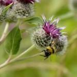 Цветы и насекомые