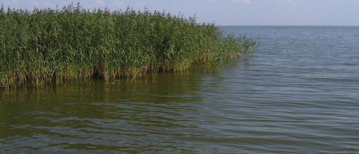 Национальный парк «Куршская коса». Часть 2: Куршский залив