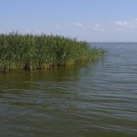 Национальный парк «Куршская коса»: Куршский залив