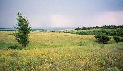 Ростовская область, окрестности станицы Краснодонецкая