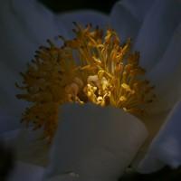 Цветы в свете. Фотографии цветов