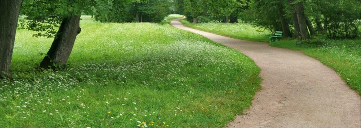 Павловский парк: районы Парадное поле и Белая береза