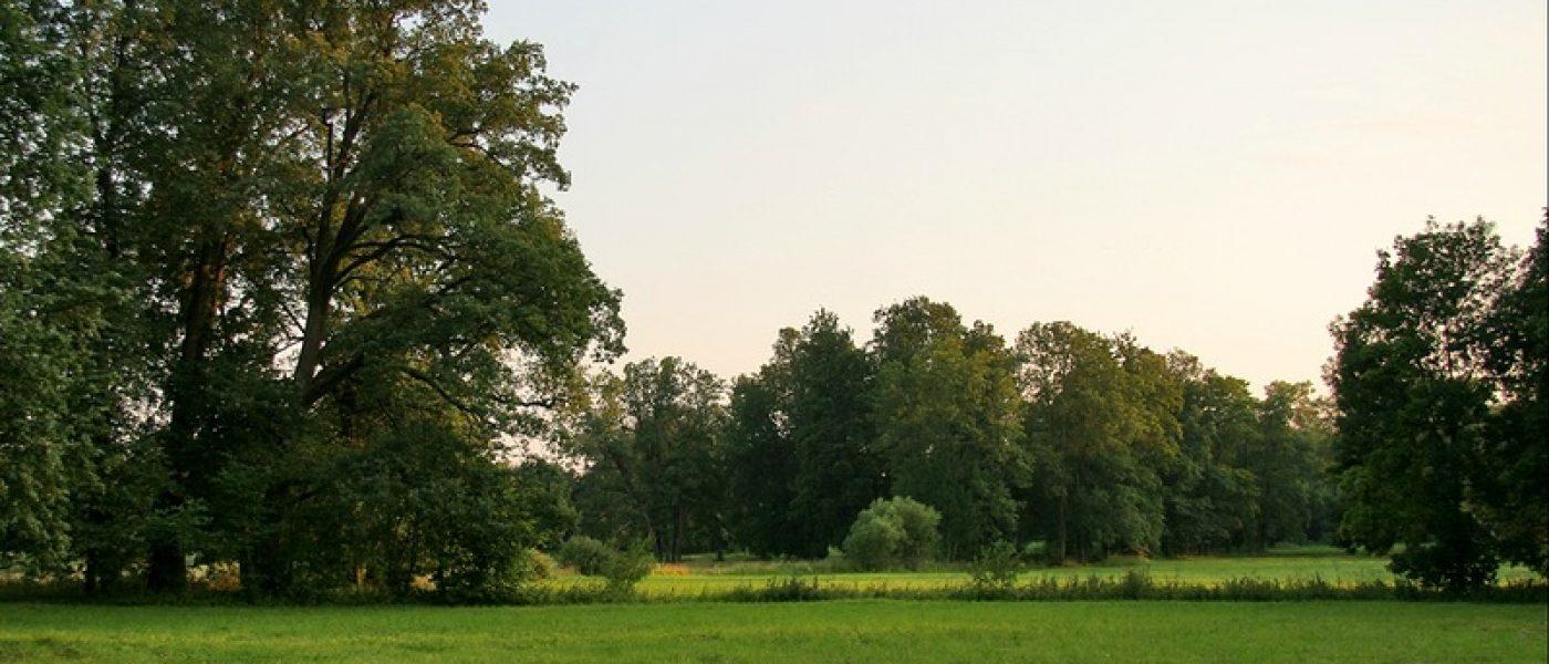 Отдельный парк (Нижний) в Царском Селе
