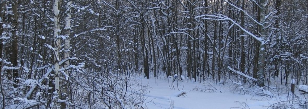 Прогулка по заснеженному лесу