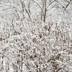 Метель в Подмосковье — белоснежный мир