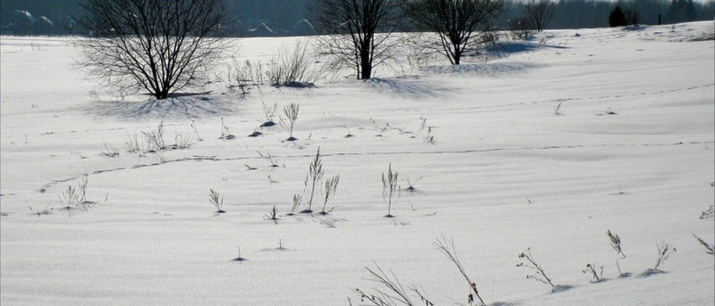 Предчувствие весны — фотопрогулка в окрестностях конюшни