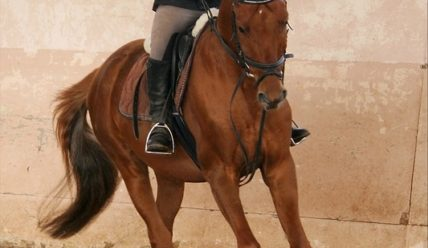 «И только лошади летают вдохновенно» — фотографии прыжковой тренировки