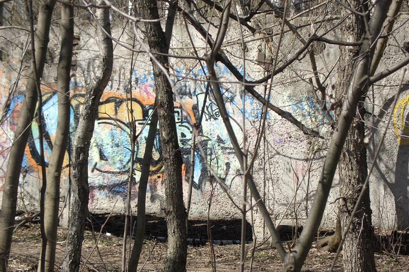 Забор, Тимирязевский лесопарк