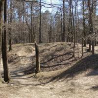 Тимирязевский парк в Москве: зеленый остров посреди мегаполиса