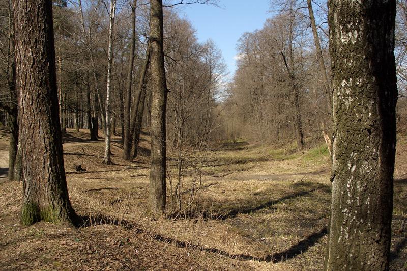 Долина речки Жабенка в Тимирязевском парке