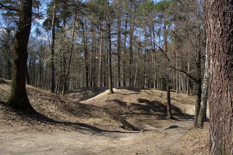 Холмы в Тимирязевском парке
