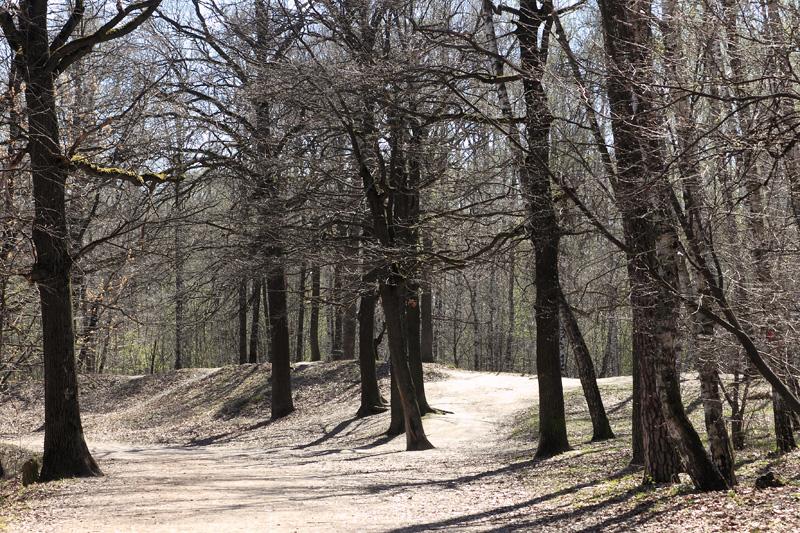 Холмы, Тимирязевский парк