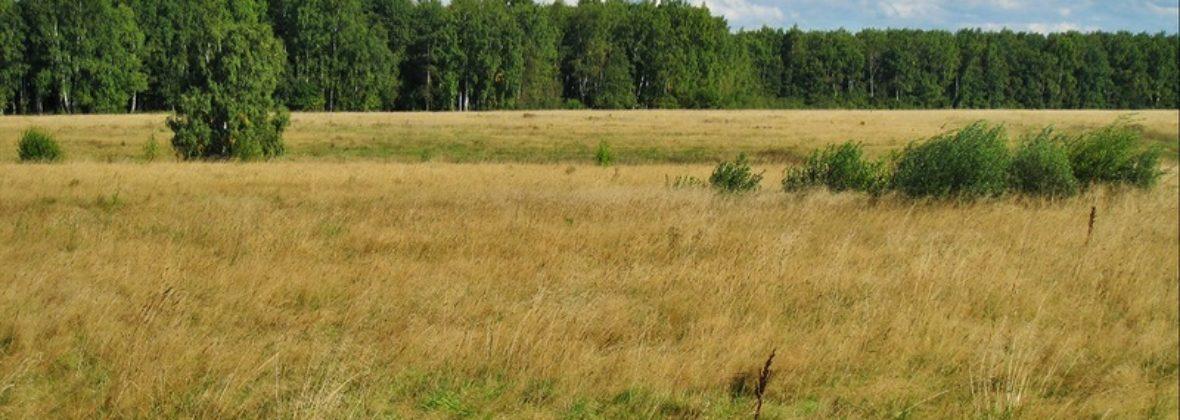 Прогулки в поля в конце августа: день первый