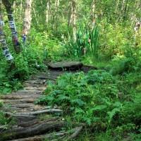 Загадки и легенды Киндяковского камня в Шутовом лесу