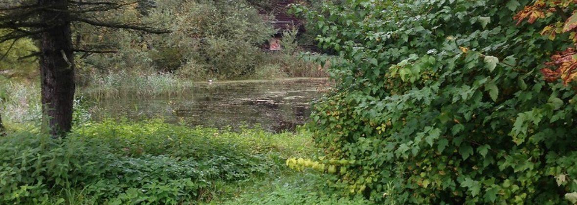 Музей соколиной охоты в Подмосковье: гармония природы и человека