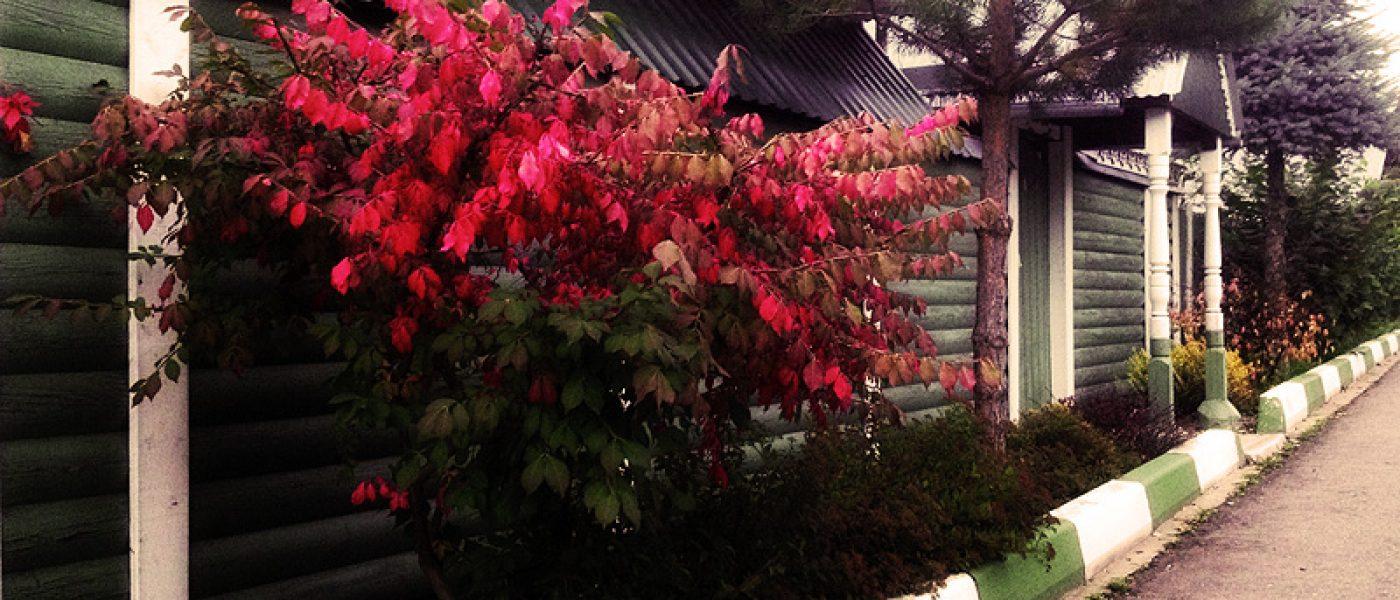 Осень, мобилография и немного настроения