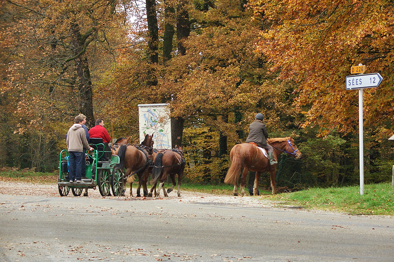 Конные маршруты в Нормандской Швейцарии